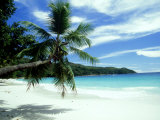 Coconut Palm on Beach, Seychelles Photographic Print by Rick Price