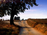 Tree on Dirt Road, Monteriggioni, Italy Photographic Print by Ellen Kamp