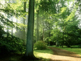 Woodland Garden in Autumn, Atmospheric Sunlight Through Trees onto Path, October Fotoprint van Mark Bolton
