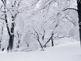 Central Park Covered in Snow, NYC Photographic Print by Shmuel Thaler