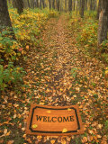 Welcome Mat on Forest Trail Photographic Print by Kevin Law