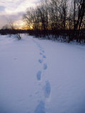 Footprints in Snow, Quincy Reservoir Photographic Print by Steven Emery