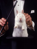 Magician Pulls Rabbit Out of Hat Photographie