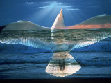 Bird Superimposed Over Ocean Photographic Print by Whitney &amp; Irma Sevin
