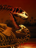 Allosaurus and Camptosaurus, Museum Photographic Print by Mark Gibson