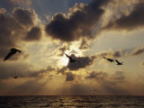 Seagulls, Sunrise, Atlantic Shore Fotografie-Druck von Jeff Greenberg