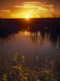 Everglades National Park, FL Photographic Print by Angelo Cavalli
