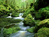 Stream and Mossy Boulders, Scotland Fotoprint van Iain Sarjeant
