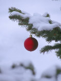X Mas Ornament on Tree Photographic Print by Mike Robinson