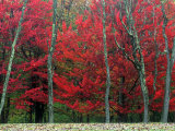 Autumn in West Virginia Photographic Print by Robert Finken