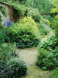 Walled Garden, Winding Path Through Herbaceous Border Stampa fotografica di Lynn Keddie