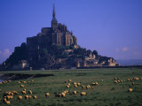 Morning with Flock of Sheep, Normandy Photographic Print by Walter Bibikow