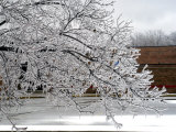 Tree Branches After an Ice Storm Photographic Print by Dennis Macdonald