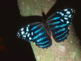 Tropical Blue Wave, Aviary Animal Photographic Print by Stan Osolinski