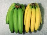 Green and Ripe Bananas Fotografisk tryk af David M. Dennis