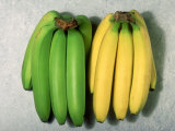 Green and Ripe Bananas Photographic Print by David M. Dennis