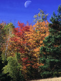Autumn Trees with Moon, Vermont Photographic Print by Russell Burden