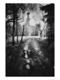 Charleville Forest, County Offaly, Ireland Premium Giclee Print by Simon Marsden