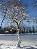 Winter Scenic, Michigan Photographic Print by Dennis Macdonald