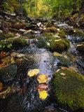 Stream in the Woods Fotografisk tryk af Dan Gair