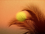 Palm Tree and Sunset Photographic Print by Jerry Koontz