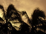 Silhouette of Palm Trees, Cayman Photographic Print by Karen Schulman