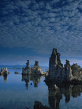 Tofas at Mono Lake, California Photographic Print by Lynn Eodice