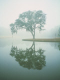 Louisiana, Oak Tree with Reflection Photographic Print by Ken Glaser