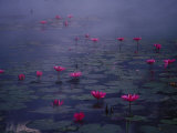 Water Lilies in Pond, Thailand Photographie par Inga Spence