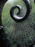 Gate with Spider Web, the Breakers, Newport, RI Fotoprint van Kindra Clineff
