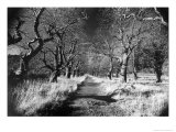 Woods at Loch Fynne, Argyllshire, Scotland Giclee Print by Simon Marsden