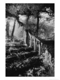 Broken Steps, Charleville Forest, County Offaly, Ireland Giclee Print by Simon Marsden