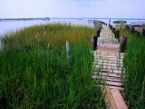 Shoreline and Dock, Chincoteague Island Fotografisk tryk af Mark Gibson