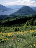 Columbia River Gorge, Gifford Pinchot Nf, WA Photographic Print by Bob LeRoy