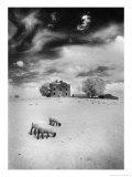 Rathpeak House, County Roscommon, Ireland Giclee Print by Simon Marsden