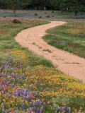 Dirt Road with Wildflowers, Texas Photographic Print by David Davis