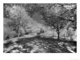 Haunted Gardens, Curry Mallet Manor, Somerset, England Giclee Print by Simon Marsden