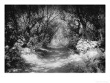 The Icknield Way, Oxfordshire, England Giclee Print by Simon Marsden