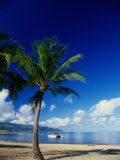 Beach and Palm Tree, Maui, Hawaii Photographic Print by Doug Page