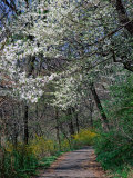 Path, Branch Brook Park, Newark, NJ Photographic Print by Barry Winiker