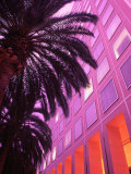 Commercial Facade with Palm Trees Photographic Print by Lonnie Duka
