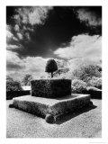 Topiary at Arley Hall, Cheshire, England Giclee Print by Simon Marsden