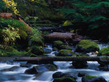 Royal Creek, OR Photographic Print by Frank Staub
