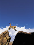 Mountain Lion Leaping, Southwest US Photographic Print by Amy And Chuck Wiley/wales