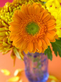 Gerbera, Close-up of an Orange Flower in a Glass Vase Photographie par Mark Bolton
