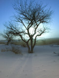 Nm, White Sands Natl Monument, Trees and Sunset Photographic Print by Walter Bibikow
