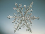 Snowflake, Close Up Photographic Print by Edward Kinsman