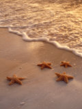 Starfish on Sand Photographic Print by Derek Cole