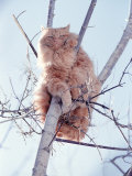 Cat Up in a Tree Photographic Print by Amy And Chuck Wiley/wales