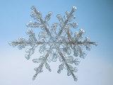 Snowflake, Close Up Reproduction photographique par Edward Kinsman